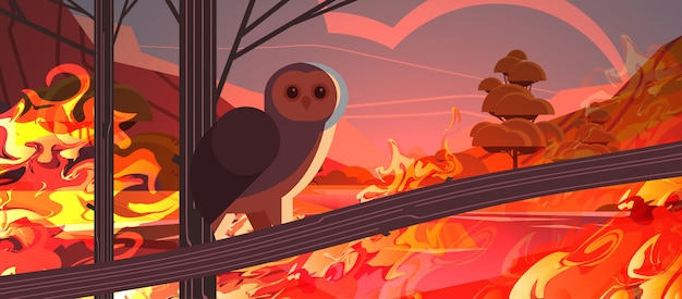 Owl bird escaping from fires in australia animals dying in wildfire bushfire natural disaster concept intense orange flames horizontal