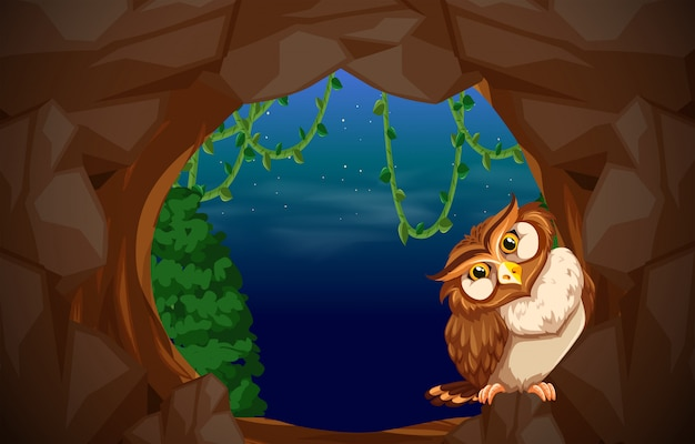 Owl in cave entrance