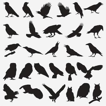 Owl crow silhouettes