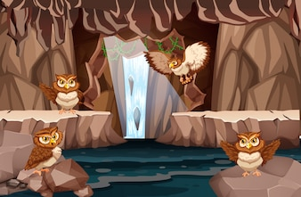 Owl living in the water cave