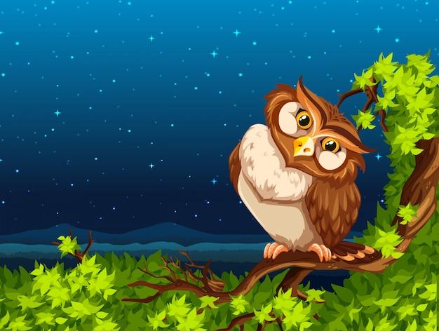 A owl at night