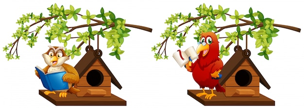 Owl and parrot reading book in birdhouse