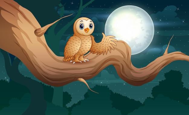 Сова сидит на ветке дерева ночью иллюстрации