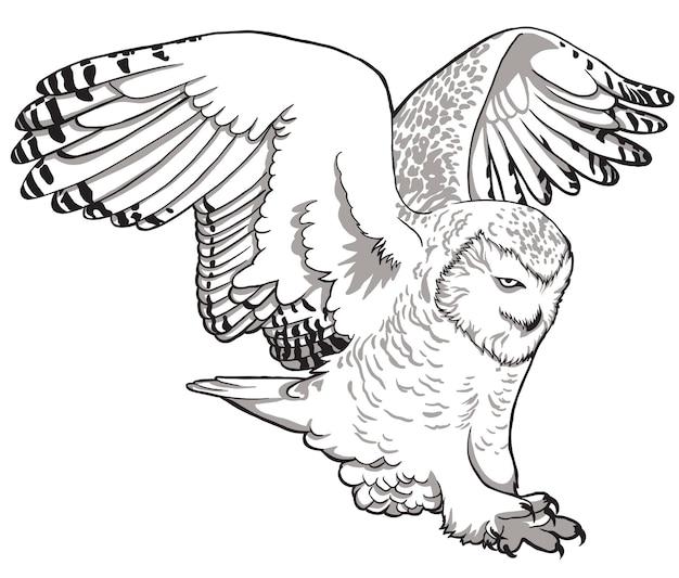 올빼미. 흰색 바탕에 올빼미의 스케치, 그린, 그래픽 초상화.