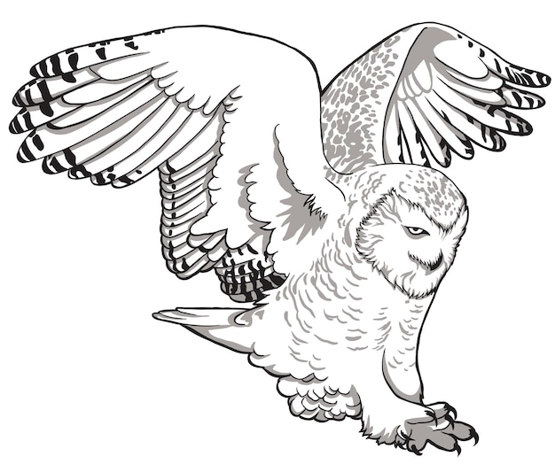Owl. sketch, drawn, graphic portrait of an owl on a white background.