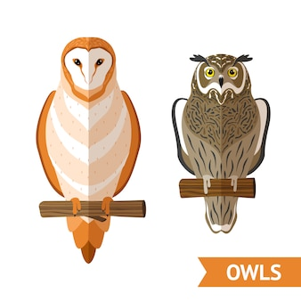 Owls front set