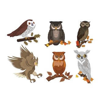 Owls icons collection colored template vector
