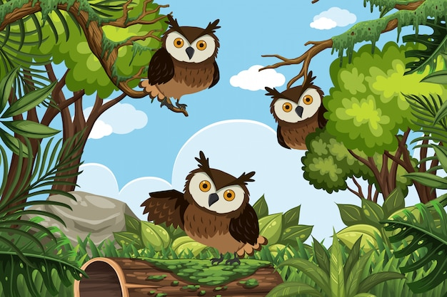 Owls in jungle scene