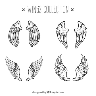 Pack of angels wings sketches