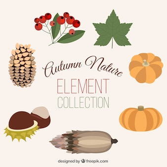 Pack of beautiful natural autumn elements