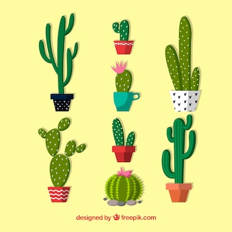 Pack of beautiful pots with cactus