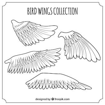 Pack of bird wings