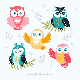 Pack of cute owls