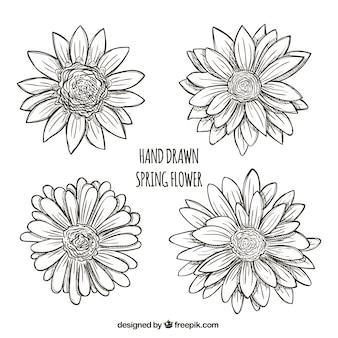 Pack of daisies sketchy