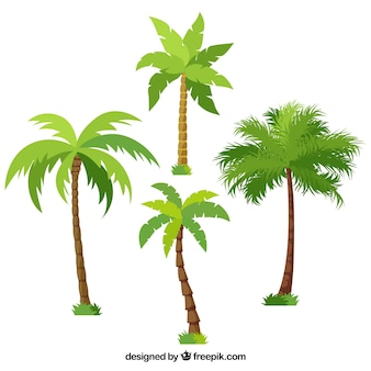 Pack of different palm trees