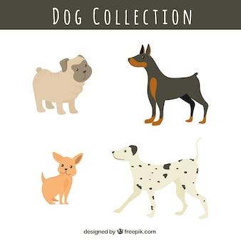 Pack of dog breeds