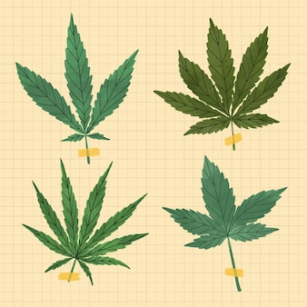 Pack of drawn botanical cannabis leaves