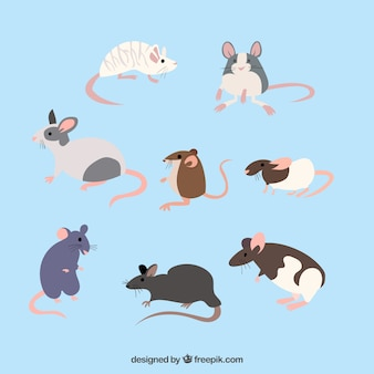 Pack of eight mice breeds