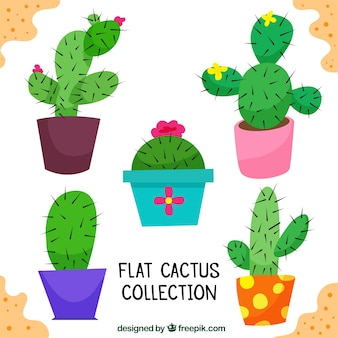 Pack of five decorative cacti