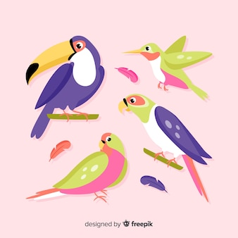 Pack of flat exotic birds