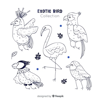 Pack of hand drawn exotic birds