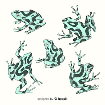 Pack of hand drawn frog
