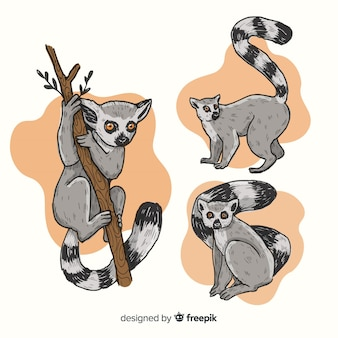 Pack of hand drawn lemur