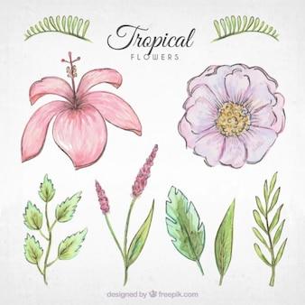 Confezione di disegnati a mano fiori e piante tropicali