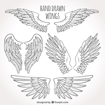 Pack of hand drawn wings