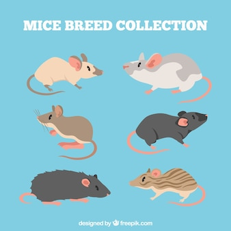 Pack of mice breeds