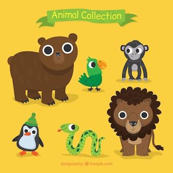 Confezione di bei animali selvatici