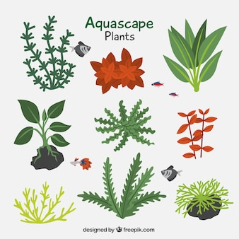 Pack of aquatic plants