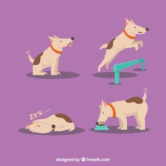 4つのシーンで犬のパック