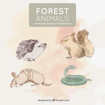 수채화로 그린 4 마리의 야생 동물 팩