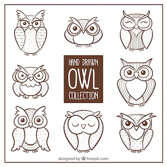 Pack of hand drawn owls