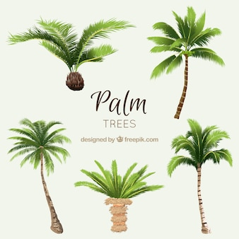 Pack of watercolor palms