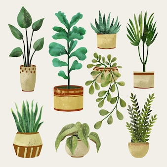 Confezione di piante d'appartamento dipinte ad acquerello