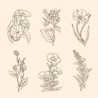 Pack of realistic hand drawn herbs & wild flowers