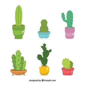 Pack of six beautiful cactus