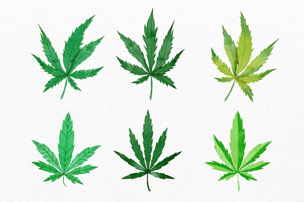 Pack of watercolor cannabis leaves