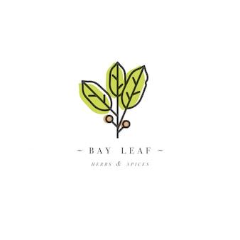 パッケージデザインテンプレートのロゴとエンブレム-ハーブとスパイス-月桂樹の葉。トレンディな直線的なスタイルのロゴ。