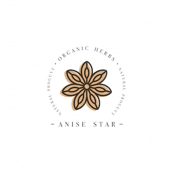 Packaging design template logo and emblem - herb and spice - anise star. logo in trendy linear style.