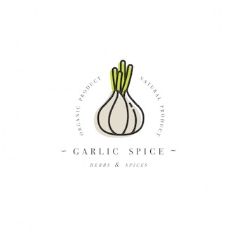 Packaging design template logo and emblem - herb and spice - garlic head. logo in trendy linear style.