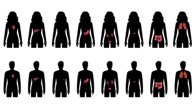 Pain in internal organs in a man and a woman body.
