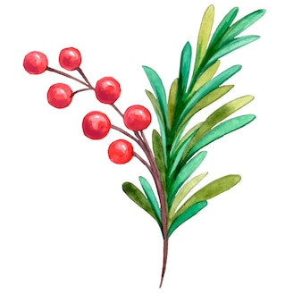 수채화로 그린 붉은 열매와 녹색 바늘 크리스마스 트리 크리스마스 나뭇 가지