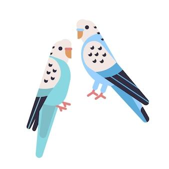 白いセキセイインコに分離されたかわいいセキセイインコのペア。飼いならされたセキセイインコ。面白いインコ。エキゾチックな熱帯の鳥。愛らしい家畜やペット。フラット漫画スタイルのベクトルイラスト。