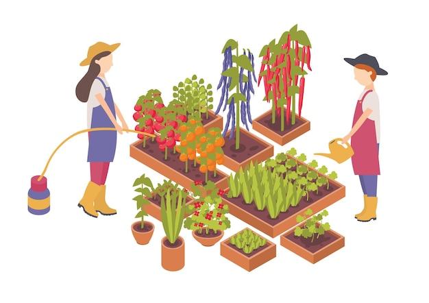 흰색 배경에 격리된 상자나 화분에서 자라는 야채에 물을 주는 여성 만화 캐릭터 한 쌍. 농업, 유기농 원예 및 농업. 다채로운 아이소메트릭 벡터 일러스트 레이 션.