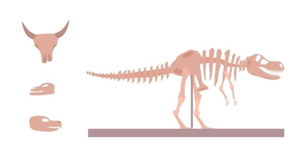 고생물학 및 고고학 박물관 전시 평면 벡터 일러스트 절연