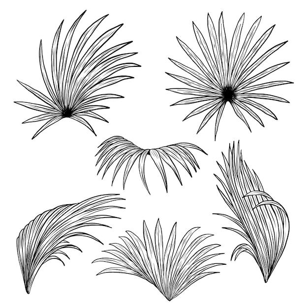 Palm вентилятор на белом фоне