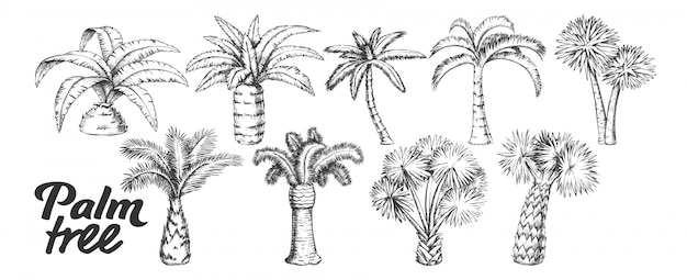Palm high and small trunk trees set